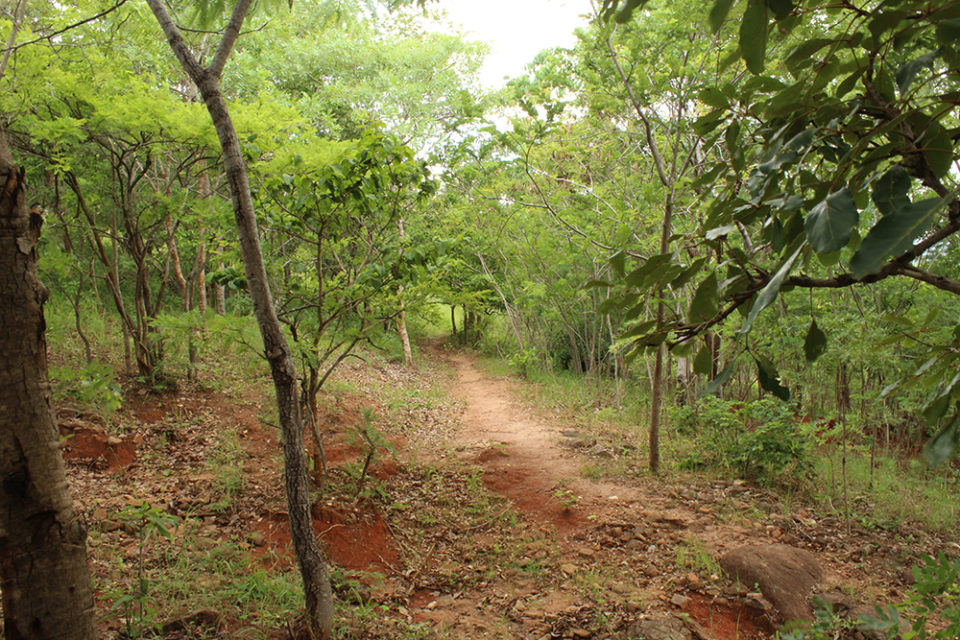 Path in Malawi